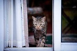 Tabby cat walking through a doorway.<br /> Photo: Ed Maynard<br /> 07976 239803<br /> www.edmaynard.com