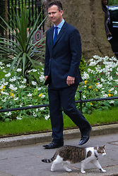 Downing Street, London, May 12th 2015. The all-conservatives Cabinet ministers gather for their first official meeting at Downing Street. PICTURED: Larry the cat at No. 10 strolls past arriving Parliamentary Under Secretary of State for Defence Personnel, Welfare and Veterans, Mark Lancaster.