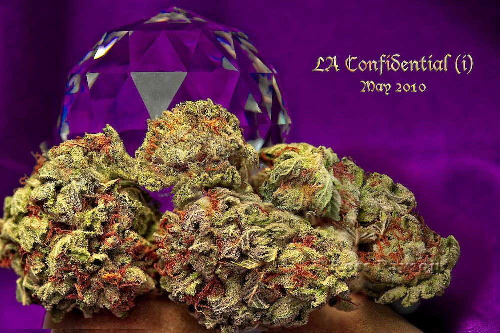 LA Confidential, nugphotos, nug photos, nug photo Cannabis, Cannabis photos, Fine Art Cannabis, Marijuana, Marijuana photos, Fine Art Marijuana, Nugs, Nug, Nug Porn, Buds, Hash, Hashish, Honey Oil