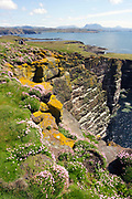 South west cliffs, Handa Island, looking east, with walkers, and seabird nesting ledges on cliff, Sutherland, Highland.