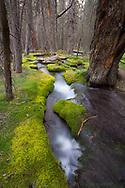 Japanese Gardens, Kananaskis