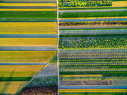 August 8, 2017 - Zhaoyuan, Zhaoyuan, China - Zhaoyuan, CHINA-August 7 2017: (EDITORIAL USE ONLY. CHINA OUT) Aerial photography of farms at the village in Zhaoyuan, east China's Shandong Province. (Credit Image: © SIPA Asia via ZUMA Wire)