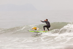 July 29, 2017 - Imperial Beach, CA, US - Surfdog returns to Imperial Beach for the twelfth  year...Sugar hanging some paw. (Credit Image: © Daren Fentiman via ZUMA Wire)