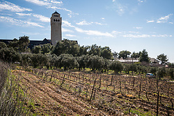 28 February 2020, Jerusalem: Vineyards and olive treas on the Mount of Olives, in front of the Augusta Victoria Hospital. The Lutheran World Federation campus, including the Augusta Victoria Hospital campus, is one of few green areas still remaining in East Jerusalem.