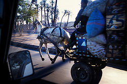 Mule with all four hooves off the ground as it struggles to pull a fully laden cart through early morning traffic, Marrakech, Morocco.<br />