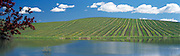Pond on a Vineyard