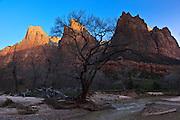USA, Utah, Zion National Park, sunrise, Court of the Patriarchs