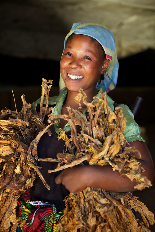 A woman with curred tobacco in a grading unit on the ZRC farm.<br /> <br /> ZRC (Zambezi Ranching & Cropping), a farm 45km from Lusaka. The farm covers an area of 31,000 hectares with 5,000 hectares under cultivation. Ther are 2,500 employees. Crops include soya, wheat, maize, barley and tobacco. Livestock include 11,000 beef cattle as well as chickens.<br /> <br /> <br /> Photo: Tom Pietrasik<br /> Chaisamba, Central Province, Zambia<br /> April 24th 2012