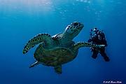 Scuba diving with a Cayman Brac sea turtle