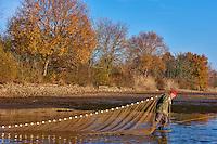 France, Indre (36), le Berry, parc naturel régional de la Brenne, vidange et pêche à l'étang, pisciculture Julien Darreau// France, Indre (36), le Berry, Brenne, natural park, fishing at the ponds, Julien Darreau