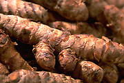 Close up selective focus photograph of Turmeric Roots