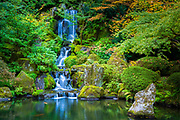 "The Portland Japanese Garden is a traditional Japanese garden occupying 12 acres, located within Washington Park in the West Hills of Portland, Oregon, United States. It is operated as a private non-profit organization, which leased the site from the city in the early 1960s. Stephen D. Bloom has been the chief executive officer of the Portland Japanese Garden since 2005. <br /> <br /> The Garden Pavilion was built in 1980 in Japanese style by local builders: it has a tiled roof, wooden verandas, and Shōji sliding doors. It is the center of several Japanese cultural festivals, art exhibitions, and other events. The west veranda faces the Flat Garden, and the east veranda overlooks downtown Portland and Mount Hood, which resembles Mount Fuji. Dozens of stone lanterns are present throughout the garden. The lower entrance features a 100-year-old temple gate, a 1976 gift of the Japanese Ancestral Society of Portland Oregon.<br /> <br /> As a Japanese garden, the desired effect is to realize a sense of peace, harmony, and tranquility and to experience the feeling of being a part of nature. Three of the essential elements used to create the garden are stone, the ""bones"" of the landscape; water, the life-giving force; and plants, the tapestry of the four seasons. Japanese garden designers feel that good stone composition is one of the most important elements in creating a well-designed garden. Secondary elements include pagodas, stone lanterns, water basins, arbors, and bridges. Japanese gardens are asymmetrical in design and reflect nature in idealized form. Traditionally, human scale is maintained throughout so that one always feels part of the environment and not overpowered by it."