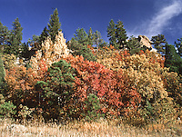 Colors of the autumn season below the  east rim of Castlewood Canyon, Castlewood Canyon State Park, Colorado