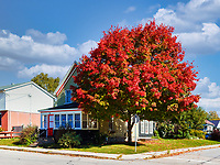 https://Duncan.co/colorful-tree-and-house