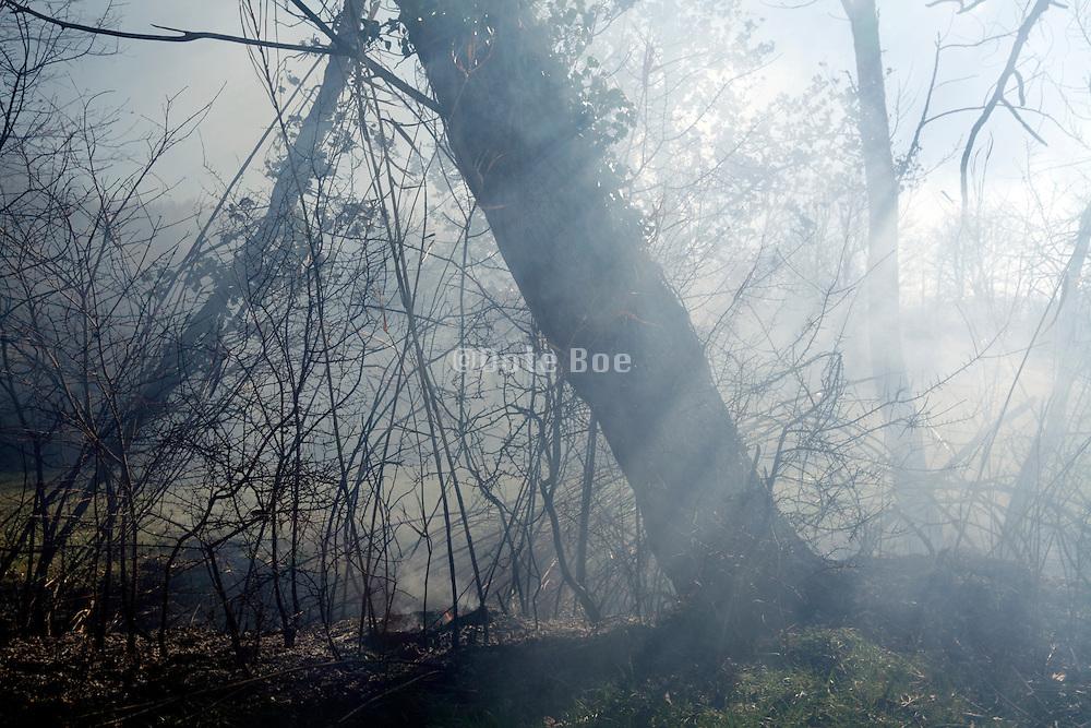 smoke from bush fire