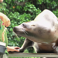 Visitors view zoo animals participating visual feeding sessions at Zoo Budapest in Budapest, Hungary on Aug. 2, 2019. ATTILA VOLGYI