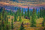 Denali Scenic Landscape