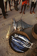 Fresh fish offloaded onto the sand beach at Campeche, Mexico.