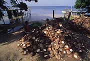 Coconut, copra, Tahaa, French Polynesia<br />