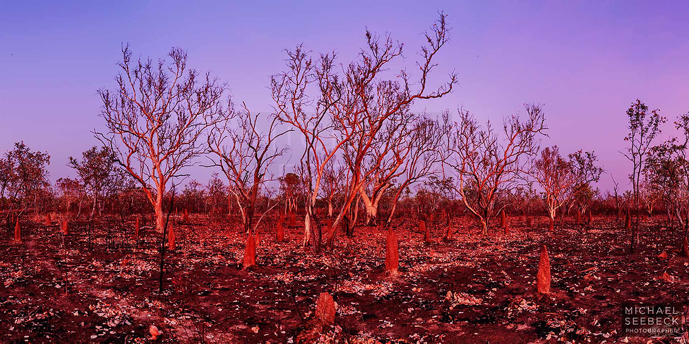 A panoramic photograph of bushfire-affected open woodland in the Roper River district of the Northern Territory, captured at dawn.<br /> <br /> Limited Edition of 125 Prints
