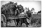 vineyard worker on horse-drawn wagon, Chateau Palmer, Bordeaux, France