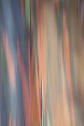 Rainbow Eucalyptus Tree Abstract
