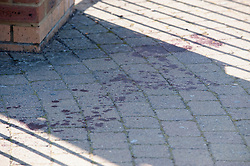 ©Licensed to London News Pictures 14/09/2020  <br /> Bromley, UK. Blood on the pavement outside the main gate. Police have cordoned off Bromley College in Bromley, South East London after reports of a stabbing outside. credit:Grant Falvey/LNP