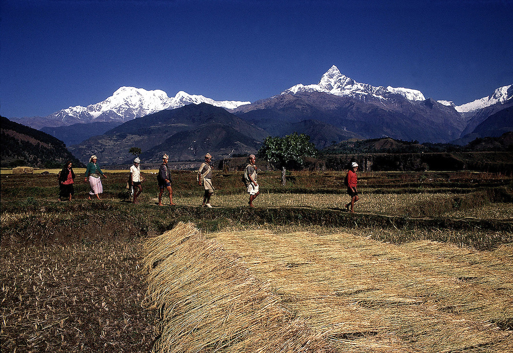 Rural farming scene in the foothills of the himalayan range. Nepal. 1969. Photographed by Terry Fincher