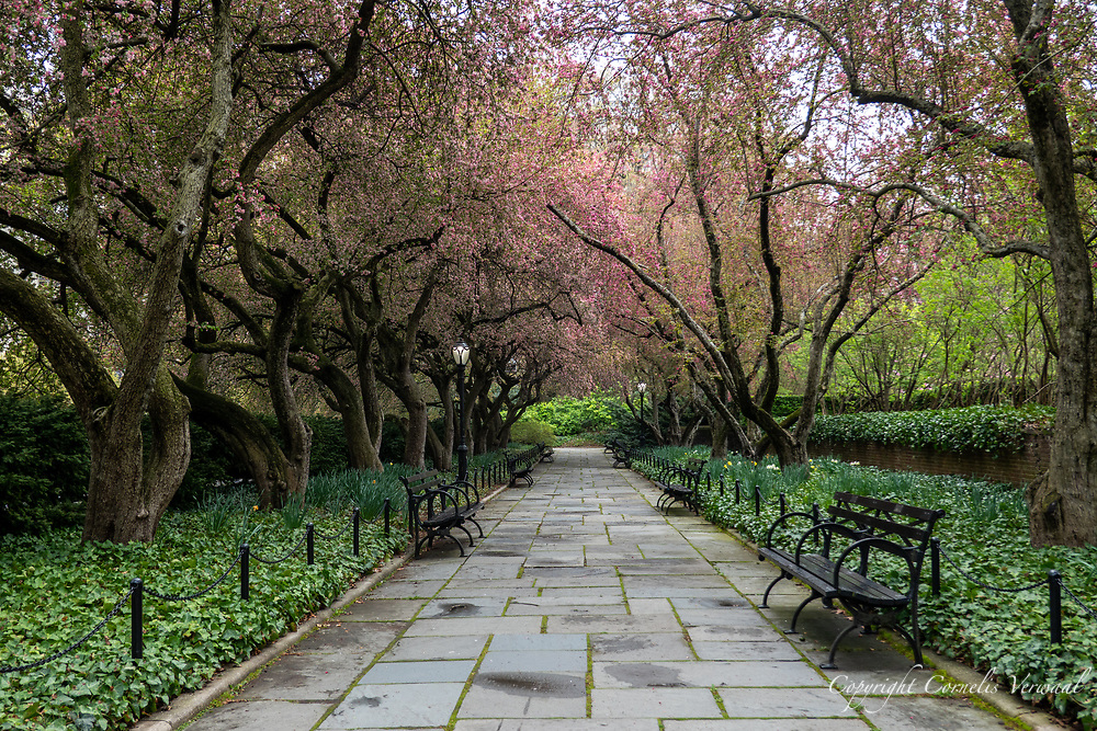 The Conservatory Garden in Central Park, April 8, 2020.