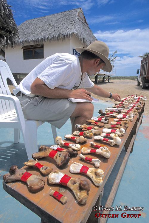 J. Nichols Logging In Turtle Toe Bones
