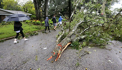 Residents check out a downed tree limb on Sequoia Trail in Maitland, Fla., as winds from Hurricane Matthew pass through central Florida, Friday, October 7, 2016. photo by Joe Burbank/Orlando Sentinel/TNS/ABACAPRESS.COM