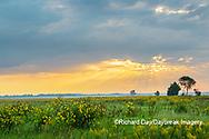 63893-03719 Sunrise and prairie Prairie Ridge State Natural Area Marion Co. IL