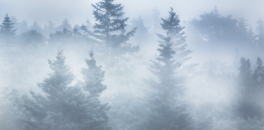 A heavy mist moves through the forest near Great Head Trail in Acadia National Park in Maine.