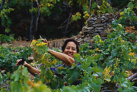 2000, Manarola, Italy --- Woman Harvesting Grapes --- Image by © Owen Franken/CORBIS
