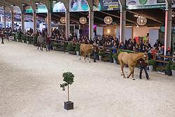 Overview <br /> Vrijspringen<br /> BWP Hengstenkeuring 2014 - Azelhof Lier<br /> © Dirk Caremans