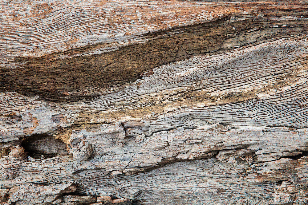 Colorful swirls and streaks stand out from the bleached remains of a tree that had been submerged for 100 years in Rattlesnake Lake near North Bend, Washington. The log reemerged after a prolonged drought caused the lake to lost nearly all of its water.