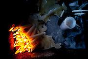 BELO HORIZONTE, MG, BRA, 28 de outubro de 2011...UOL...Minas Trend Preview. Caderno de Moda avalia tendencias de consumo. .Grife Marcio Lopes..Foto: RODRIGO LIMA / UOL.