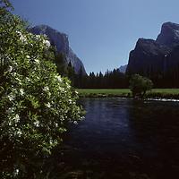 YOSEMITE NAT.PARK. Yosemite Valley & Merced River. Cathedral Rocks (R).