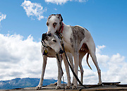 Blind rescued greyhound dogs visit the a Lake Tahoe beach in September 2010.