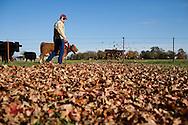 Leaves fall on a farm outside the Southeast Kansas town of Girard.