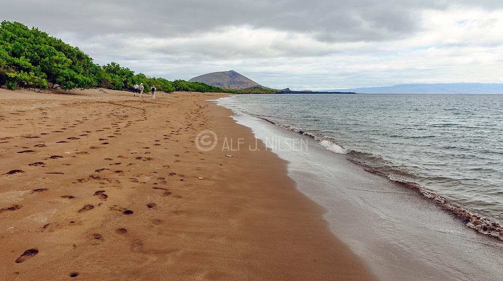 Espumilla Beach on the northern end of James Bay, Santiago Island, Galapagos