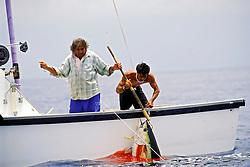 """Hawaiian """"green stick"""" tuna fishermen, gaffing yellowfin tuna or `A-hi in Hawaiian, Thunnus albacares, off Kona Coast, Big Island, Hawaii, Pacific Ocean"""
