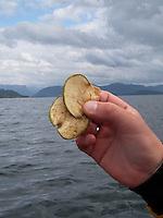 Dry apples; Homemead snack - fjord crossing by kayak, Sognefjorden, Sogn og fjordane - Hjemmelagde Tørkede epler med kanel som snack under fjordkryssing av Sognafjorden