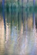 Forest reflections, Manzanita Lake, California  2007