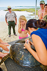 Park Ranger and bystandards, observing a student from Hawaii Preparatory Academy (HPA) tracing an inscribed number with white house paint, Sea Turtle Research, organized by researcher George Balazs PhD, NOAA National Marine Fisheries Service (NMFS), HPA students and teachers (NOAA/HPA Marine Turtle Program), and ReefTeach volunteers at Kaloko-Honokohau National Historical Park, Kona Coast, Big Island, Hawaii, USA, Pacific Ocean