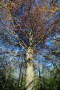 Park Sorghvliet in Den Haag, Zuid Holland. - Parc Sorghvliet in The Hague, Netherlands