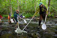 Vermont Fish and Wildlife Biologist shocking a small stream in the Northeast Kingdom during Vermont TU's inagural Trout Camp, 2011