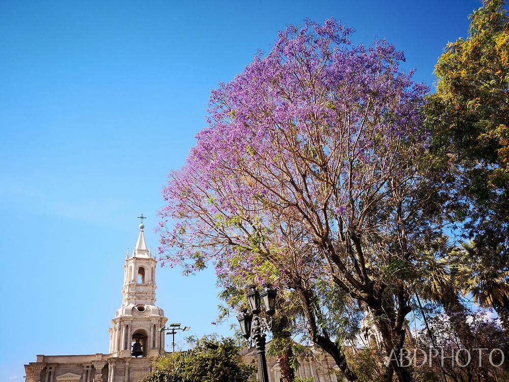 smacap_Bright Arequipa, Argentina, South America
