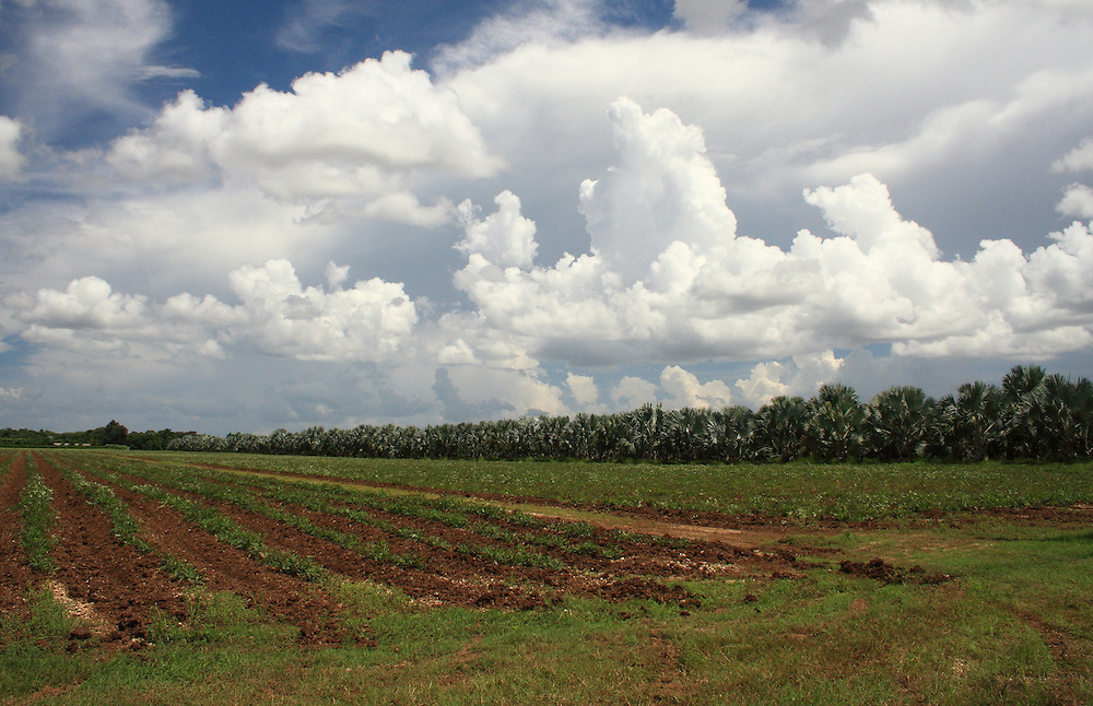 Palm Tree Farm, Miami-Dade County