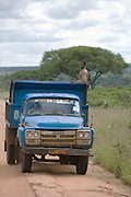 A local truck,Tarangire National Park, United Republic of Tanzania, Tarangire Park is located about 120km from Arusha, south east of Manyara.